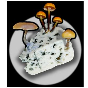 Myceliums